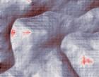 automated nucleic acid isolation